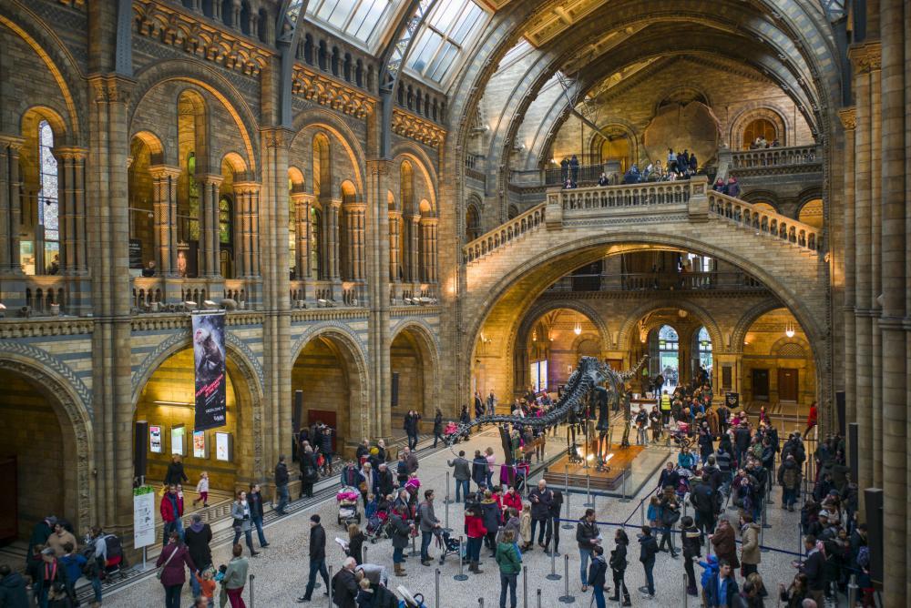 Musée d'histoire naturelle - Musée