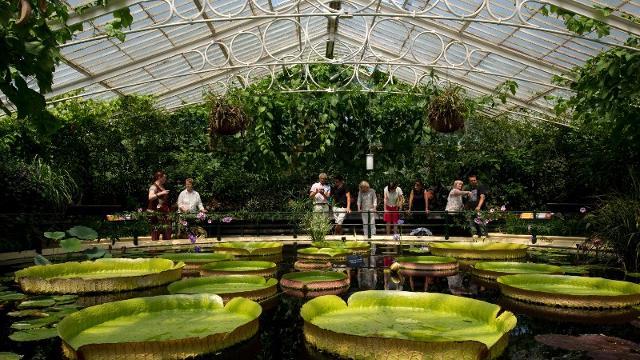 Kew Gardens - Jardins botaniques royaux