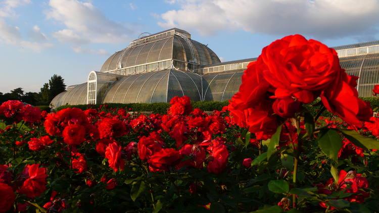 Kew Gardens - Maison Nénuphar