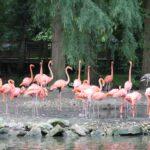 Un œil en coulisse : l'émission sur l'actualité du zooparc de Beauval
