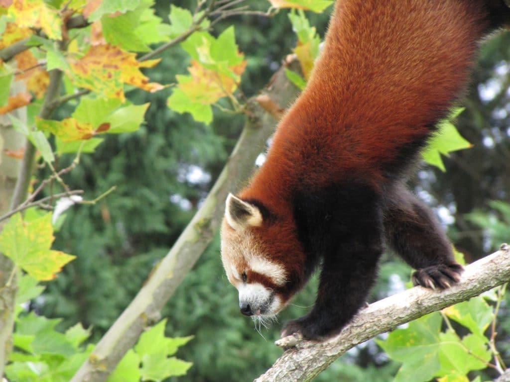Le zooparc de Beauval : tarifs et horaires