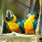 Découvrez les plus beaux zoos de France