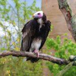 Découvrez les nouveautés du zooparc de Beauval