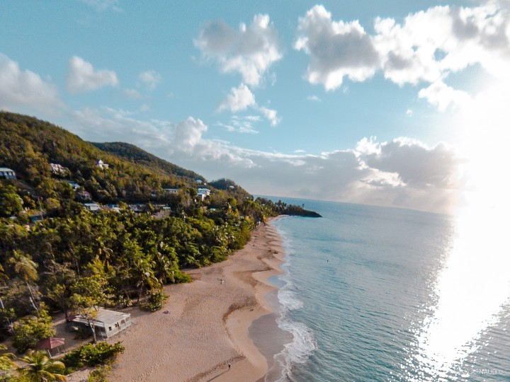 Guadeloupe - arbre / M