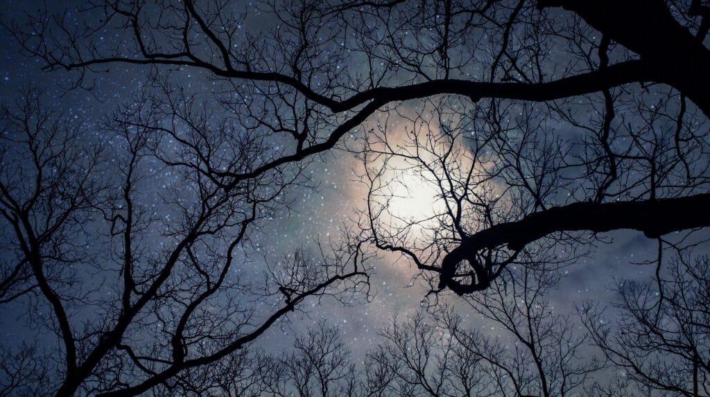 Contempler la nuit des étoiles