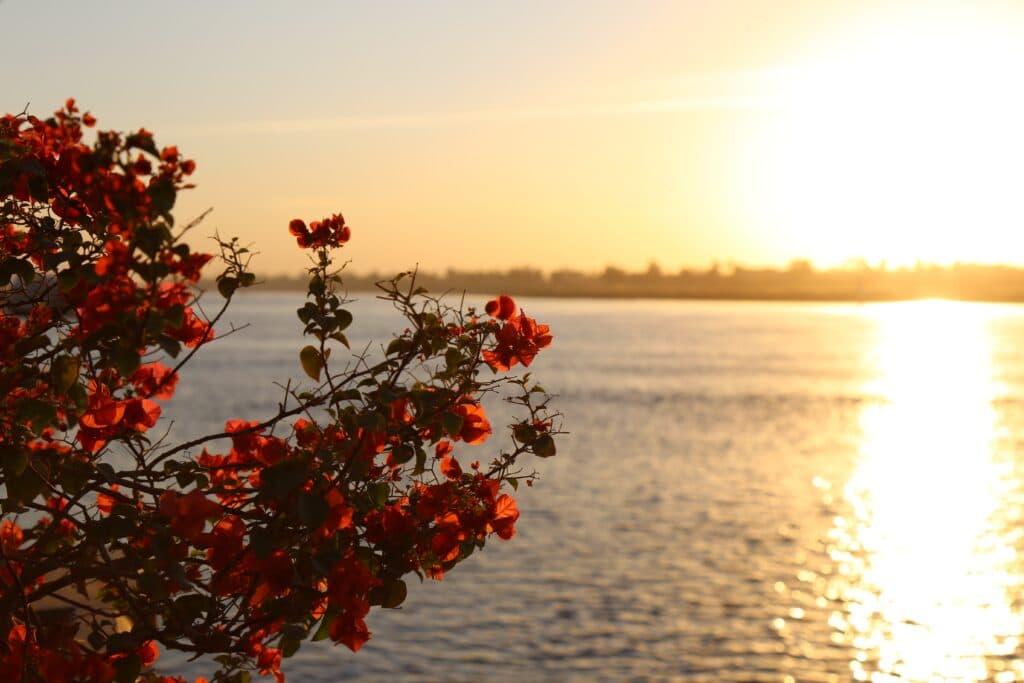 Des croisières sur le Nil avec Flashtour