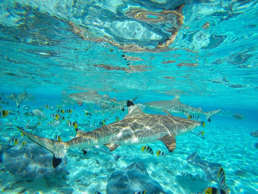 Les richesses de la Polynésie