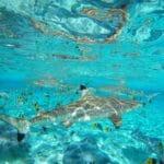 Les meilleures croisières en Polynésie