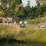Les parcs et jardin à visiter à Lyon