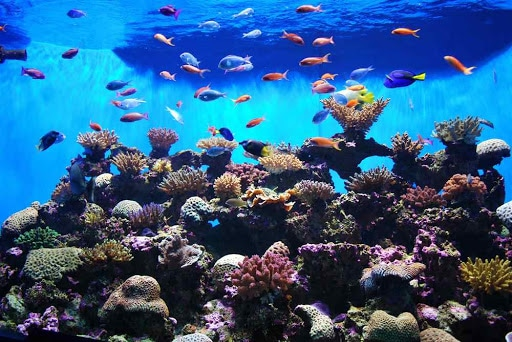 Aquarium - Aquarium 3D Fond D'écran Animé HD