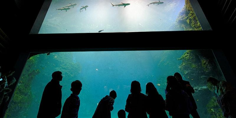 Aquarium de Lyon - Aquarium