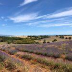 Comment organiser ses vacances à Aix-en-Provence ?
