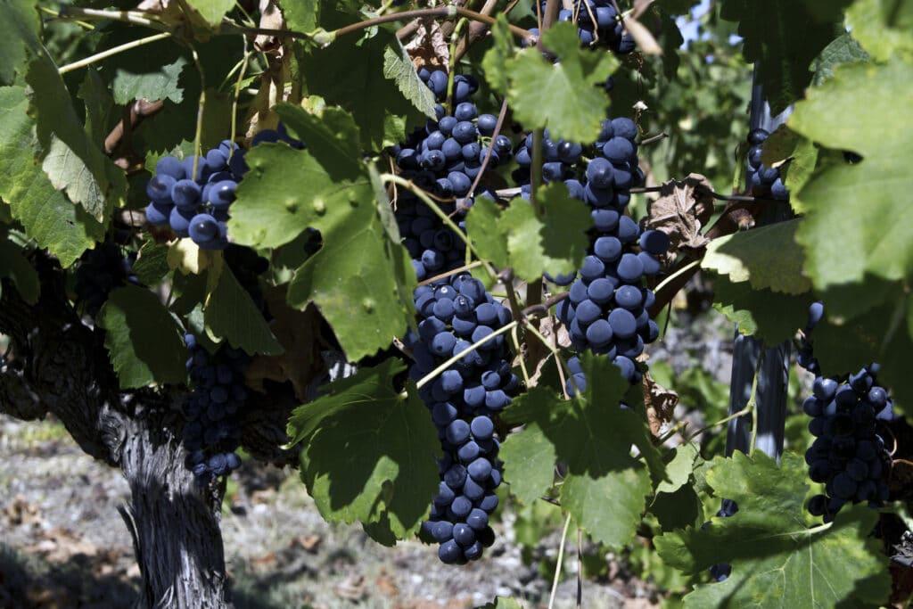 La route des vins de Côte du Rhône