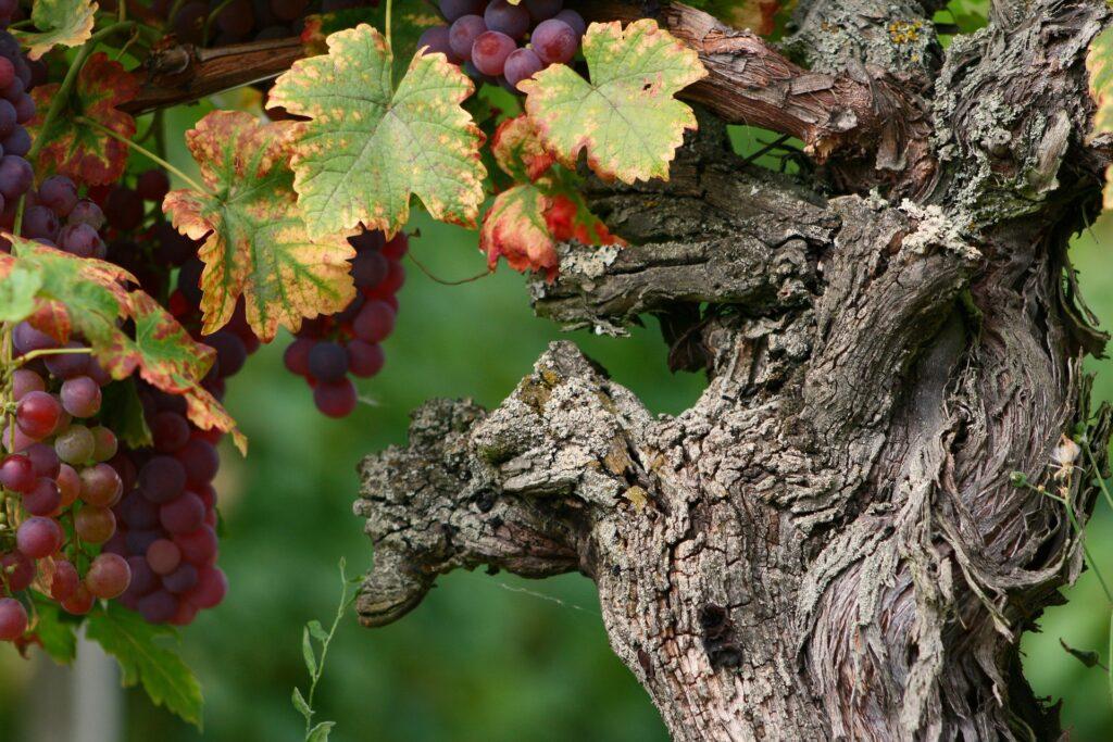 Découvrir la route des vins d'Alsace