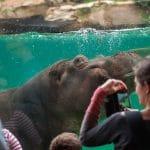 Le zooparc de Beauval a réouvert ses portes le 2 juin