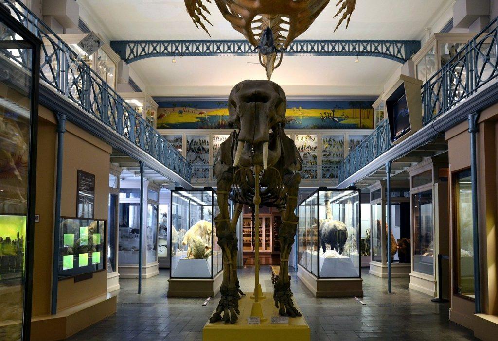 Combien coûte une entrée au Muséum National d'histoire naturelle ?