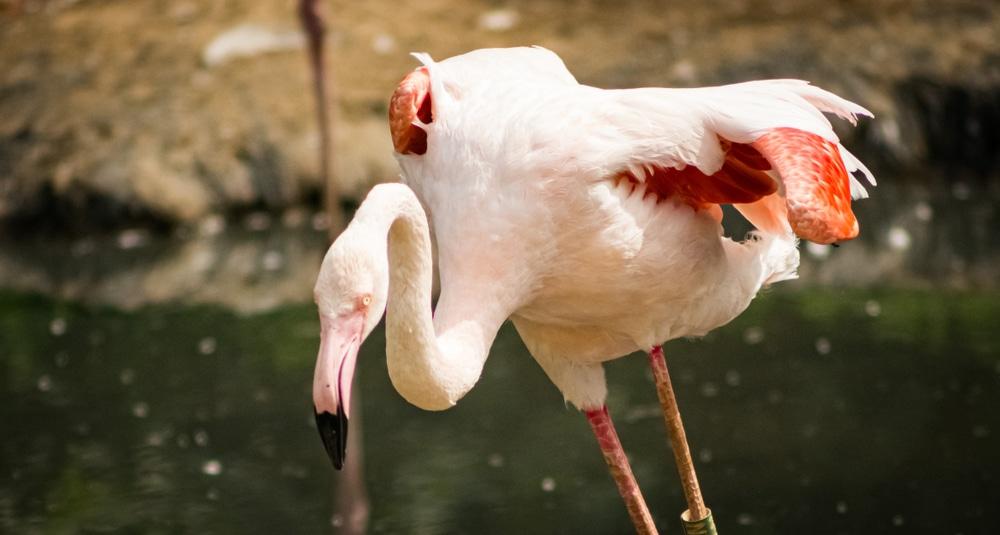 Parc zoologique de Paris : tarifs et accès