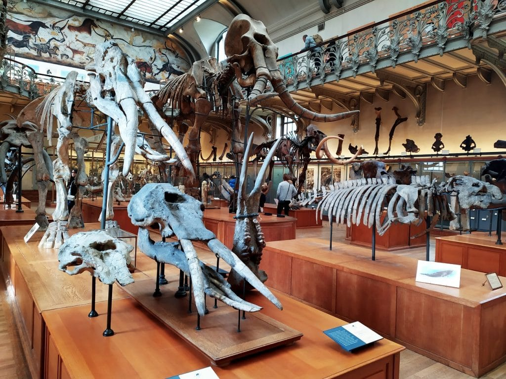 Quand visiter le Muséum ?