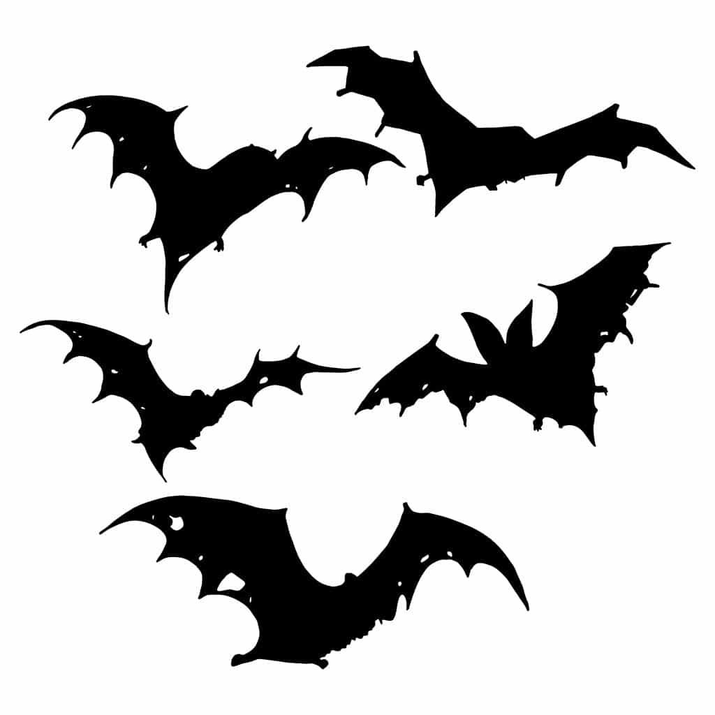 Les origines du Musée des Vampires et des monstres de l'imaginaire