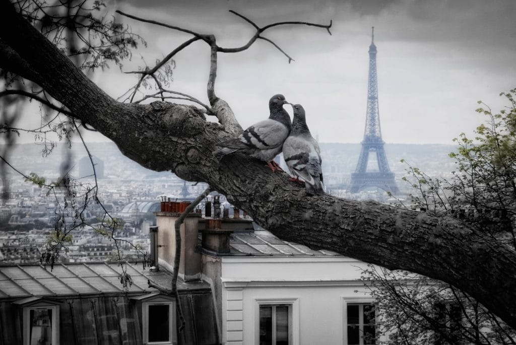 tour Eiffel - Photographie de stock