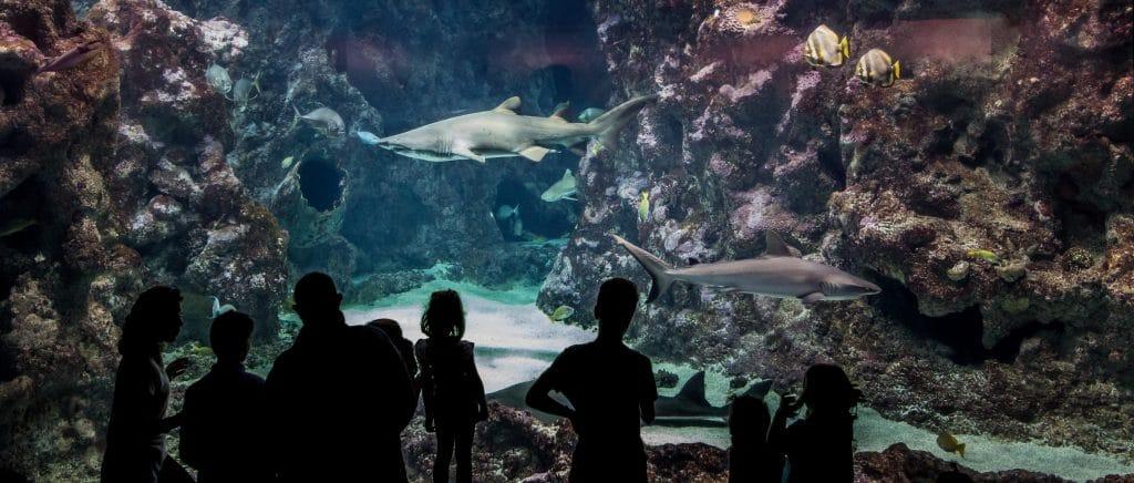 Terre - biologie marine