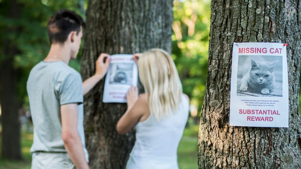 Coller des affiches dans la rue, chez les commerçants et chez le vétérinaire