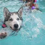 Focus sur les piscines hors sol