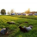Faire du camping à la ferme : une idée vacances ?